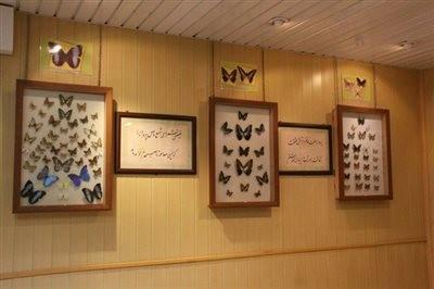 Butterflies Garden Museum