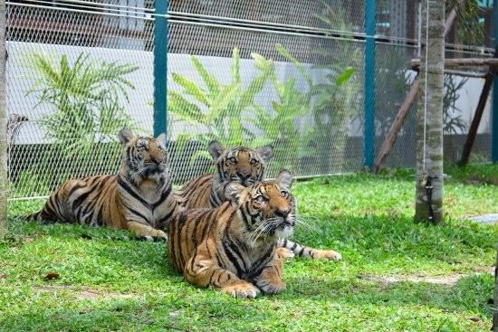 Tiger Park
