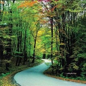 Rango Forest