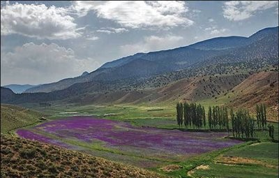 Chahar Bagh Village