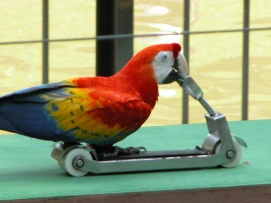 پارک پرندگان کوالالامپور