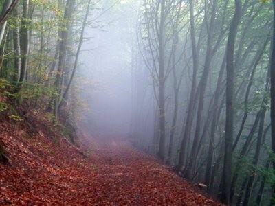 Alimestan Forest