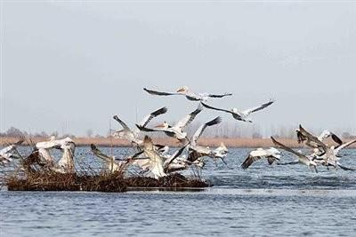 Kani Brazan Lagoon