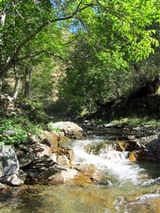 Imamzadeh Seyed Hossein Forest Park
