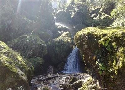 Abshar Chelandar Forest Park