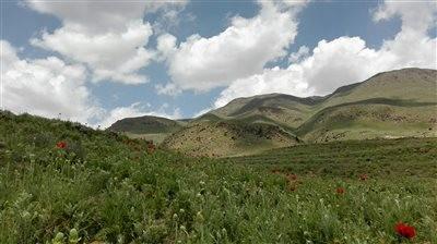 Damavand Hillside