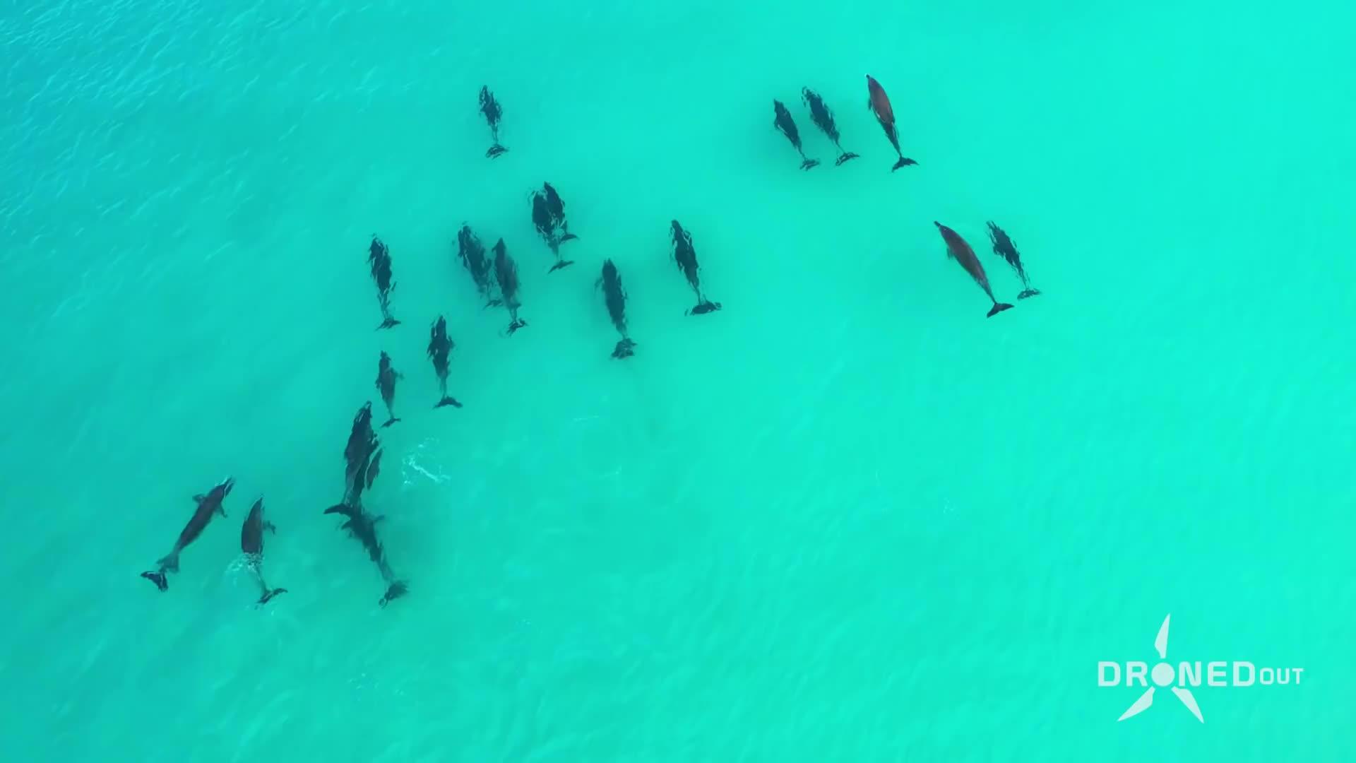 دلفینهایی که با انسانها شنا میکنند!