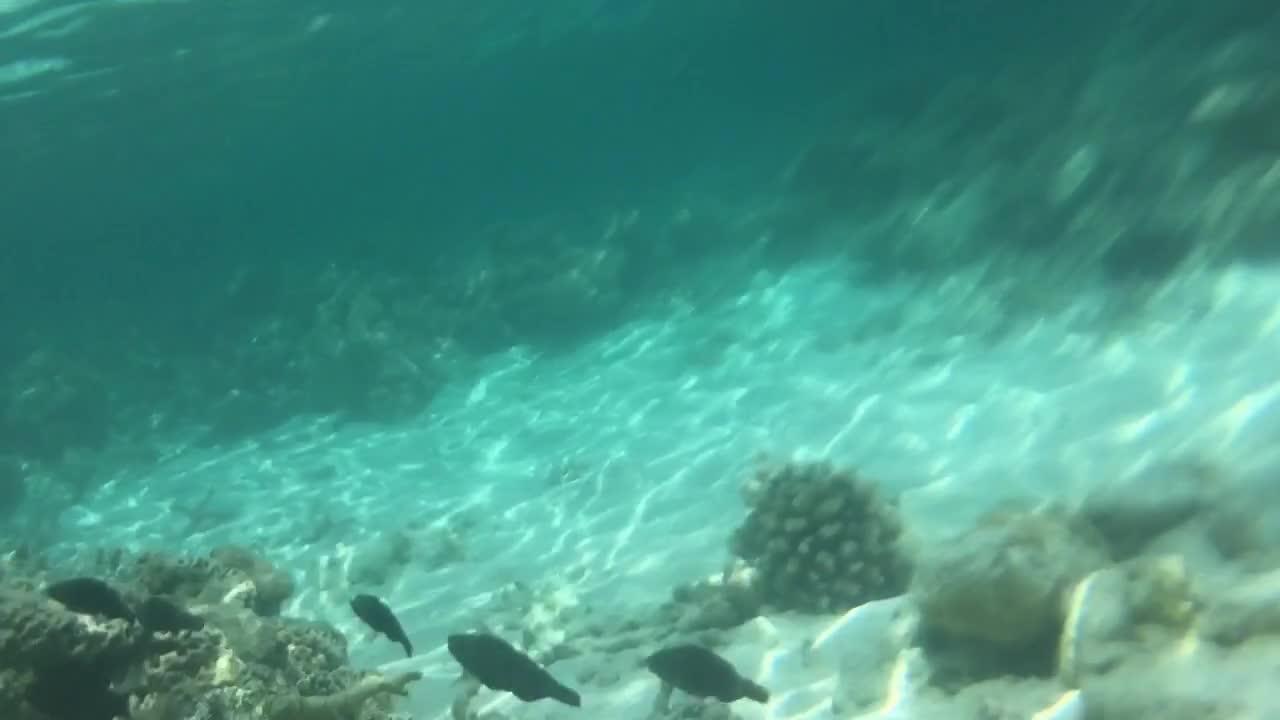 مالدیو، دنیای شگفت انگیز اقیانوس هند