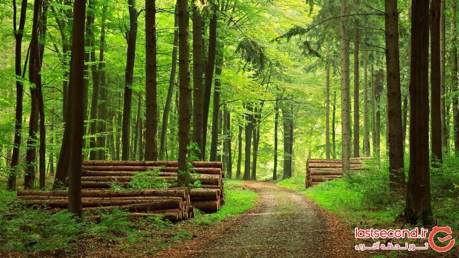 بزرگترین جنگل ها در کدام کشورها قرار دارند