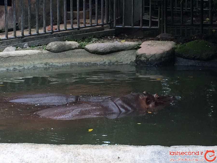 اسب آبی در باغ وحش