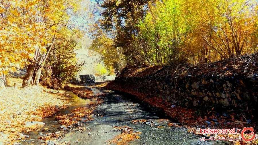 فریاد های شبانه از عمق جنگل مخوف ایران