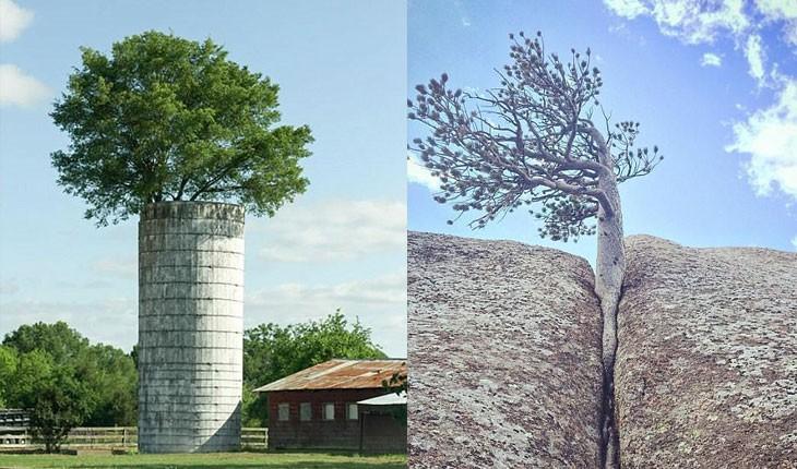 رویش درخت ها در عجیب ترین نقاط
