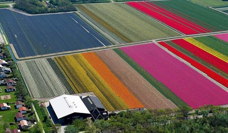 تصاویر هوایی فوق العاده زیبا از مزارع لاله در هلند