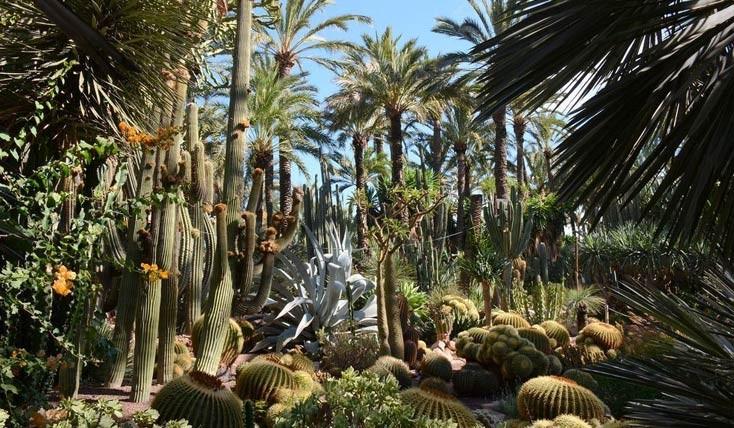 سرزمین درختان نخل در اسپانیا