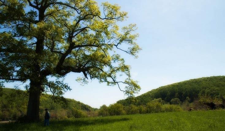 درختانی که شاهد جنگ داخلی آمریکا بوده اند!