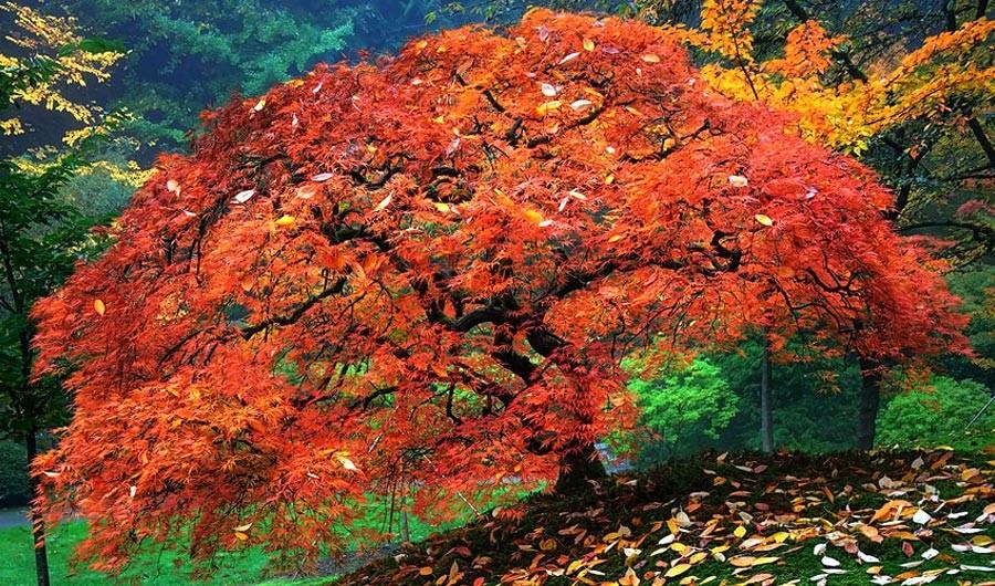 9 نکته برای عکاسی در فصل پاییز 