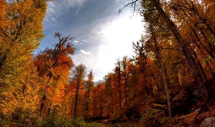 جنگل راش، ثروتی پنهان در طبیعت سوادکوه