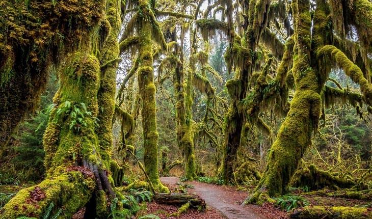 جنگل بارانی هوه ، پدیده طبیعی زیبا و منحصر به فرد 
