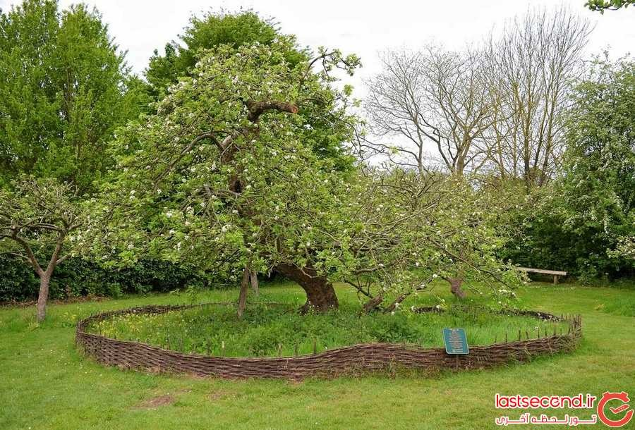 درخت سیب نیوتن کجا قرار دارد؟