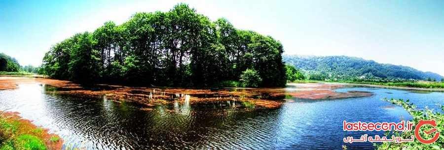 تالاب سوستان زیستگاه نیلوفران لاهیجان
