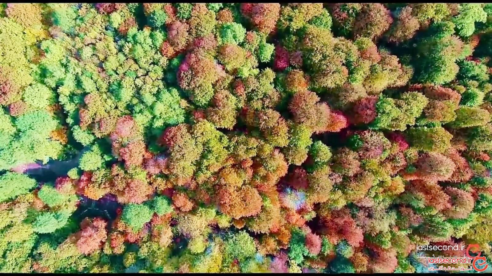 فرشی از جنس درخت بر پهنه مازندران