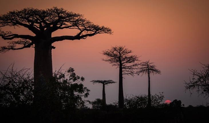 با این تصاویر سفری به ماداگاسکار داشته باشید