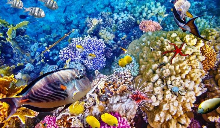 مقاصد دوستدار محیط زیست از گوشه کنار دنیا