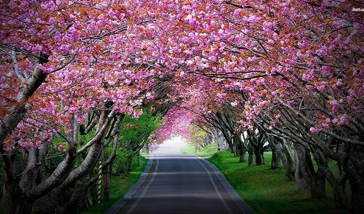 تونل های درختی  شگفت انگیز در سراسر جهان