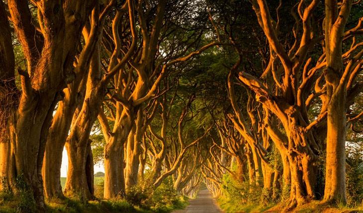 فانتزی ترین جنگل های جهان 
