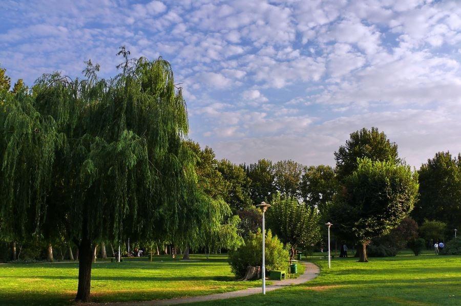 پارک-لاله9.jpg