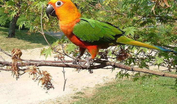 15 پرنده زیبا در برزیل و جایی که آنها را می توانید پیدا کنید!