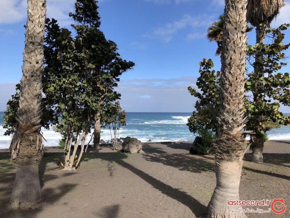 طبیعت کنار ساحل Puerto de la Cruz