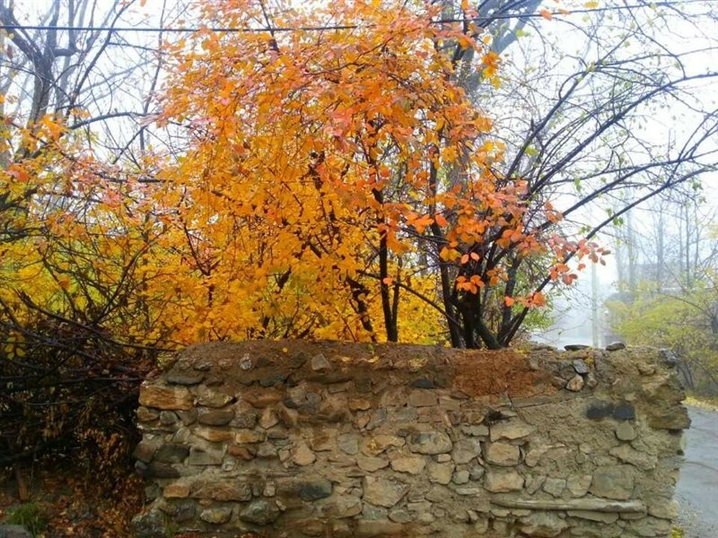 Afif-Abad Garden (1).jpg