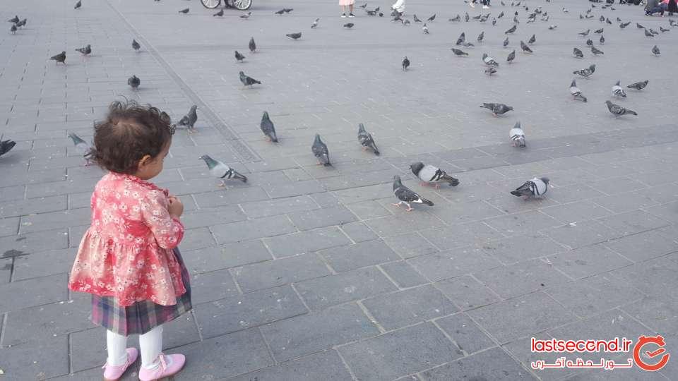 taksim-birds.jpg