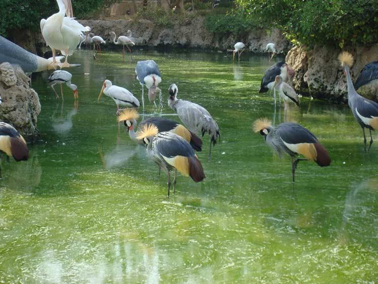 Kish Birds Garden