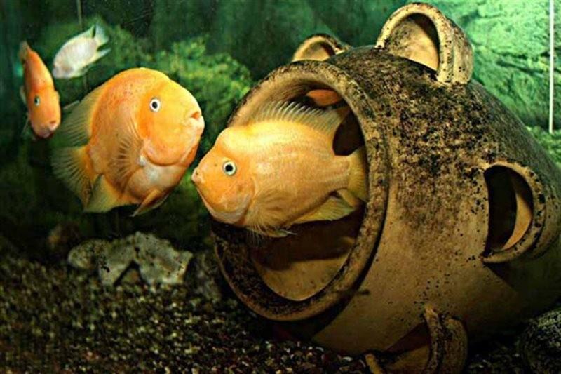 Kish Aquarium (1).jpg