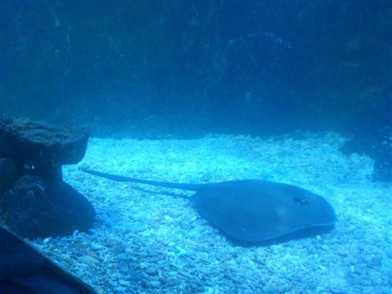 Kish Aquarium (5).jpg