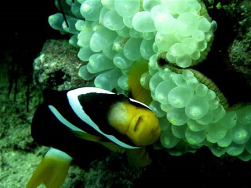 Kish Aquarium (2).jpg