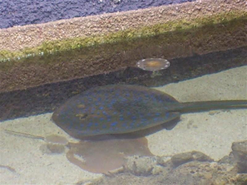 Kish Aquarium (7).jpg