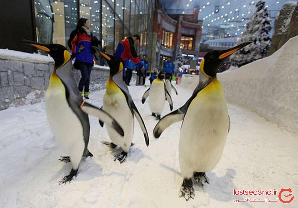 پیست اسکی امارات مال دبی