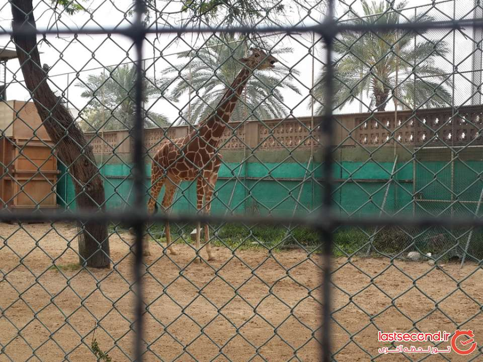 باغ وحش محقر دبی