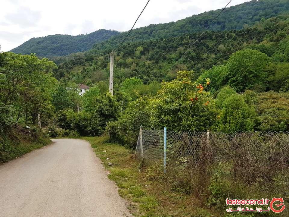مسیر جنگلی روستای اوشیان
