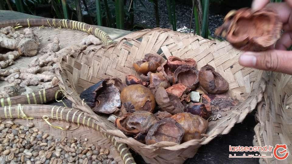 قهوه در بالی