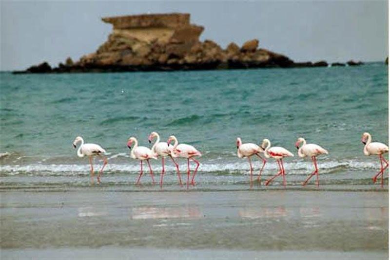 Naaz Island