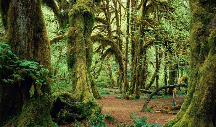 جنگل انجیلی، شگفتی طبیعت سوادکوه