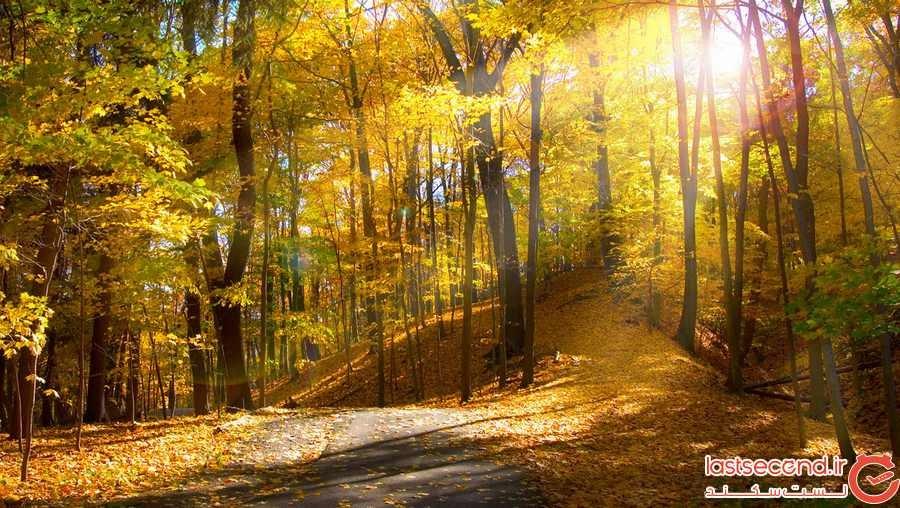 جنگل انجیلی