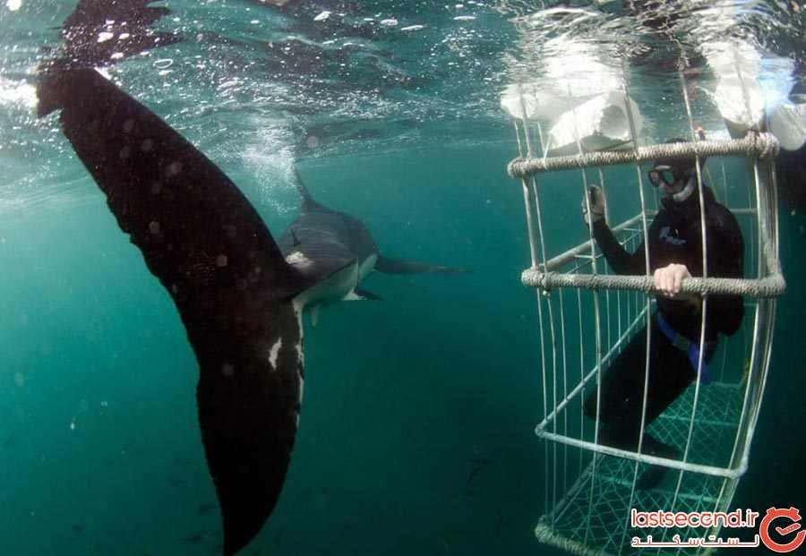 جزیره فکها، آفریقای جنوبی