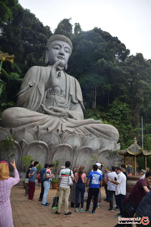 مجسمه بودا در گل نیلوفر