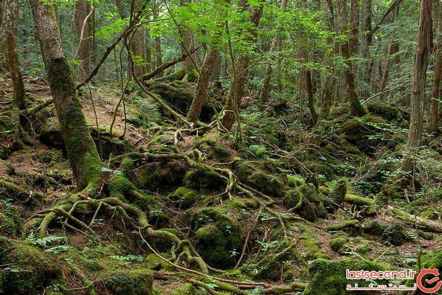 جنگل خودکشی ژاپن