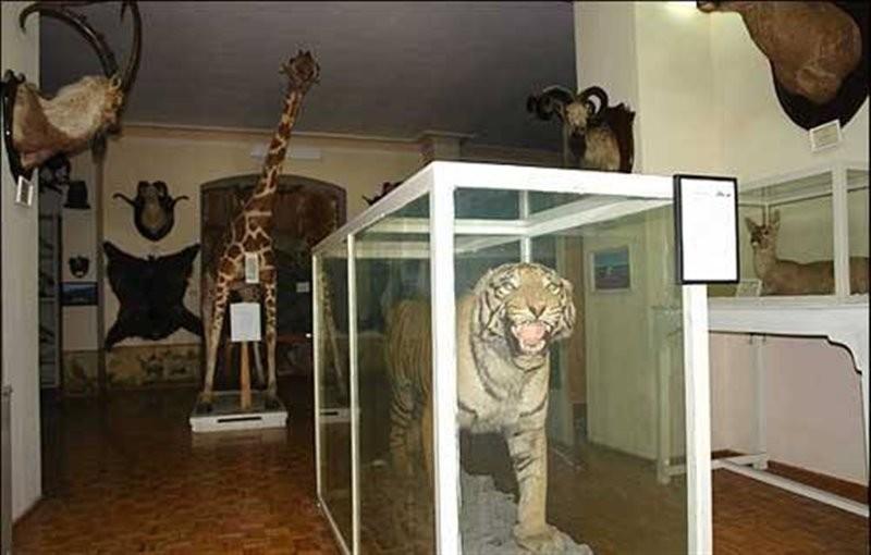 موزه-جانور-شناسی-17571-همگردی.jpg
